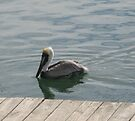 Pelican in the Water by ValeriesGallery