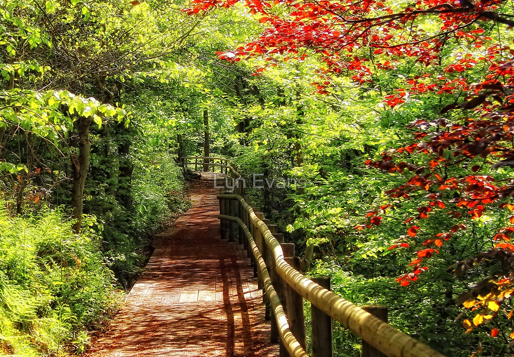 The Summer path by Lyn Evans