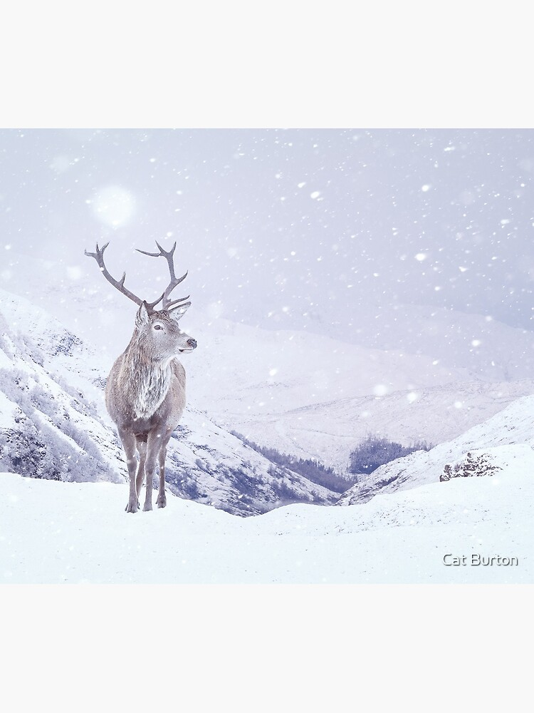 """Kingdom Of Winter"" by Cat Burton by cat-burton"