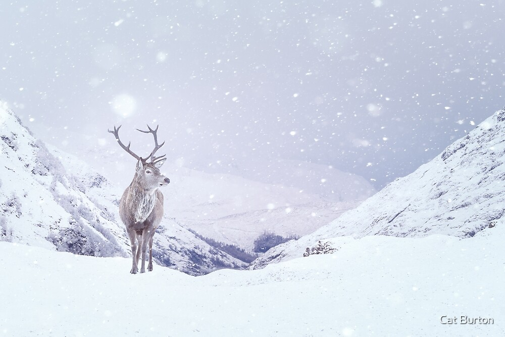 """Kingdom Of Winter"" by Cat Burton by Cat Burton"