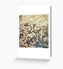 Golden Lily Pads - Art Photography - Nature Decor Greeting Card