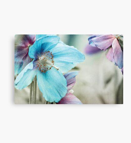 Himalayan blue Canvas Print