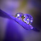 Violets In Water Refraction by Shelly Harris