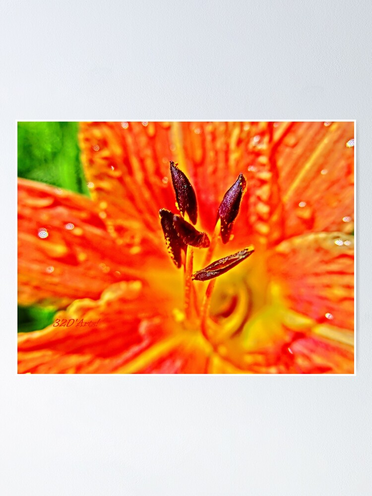 Alternate view of Five Stamen Day Lilly  Poster