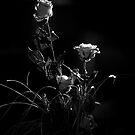 Light by Marco Vegni