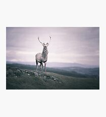 """""""The Prince"""" by Cat Burton Photographic Print"""