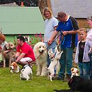 Dog show entrants by SWEEPER