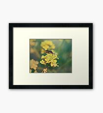 Wasp on Flower - Nature Photography Framed Print