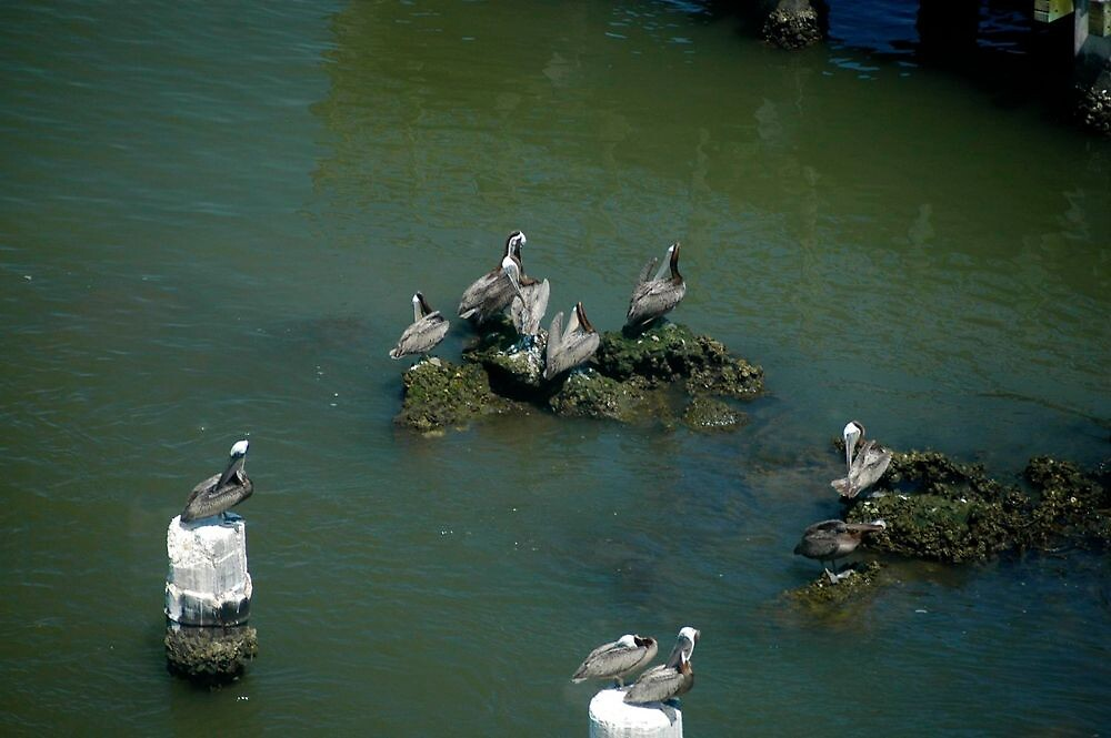 Pelicans at rest by Ann Reece