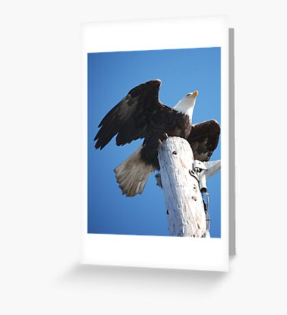 Bald Eagle ready for flight Greeting Card