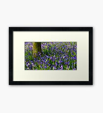 Bluebell meadow Framed Print