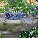 Blue Splish, Splash by Judy Wanamaker