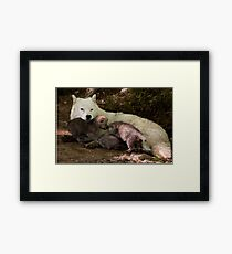 Arctic Wolf And Pups Framed Print