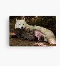 Arctic Wolf And Pups Canvas Print