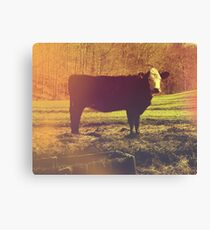On The Farm - Photography - Nature Photography - Cow Canvas Print