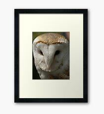Barn Owl - Best Seen On Large View  Framed Print