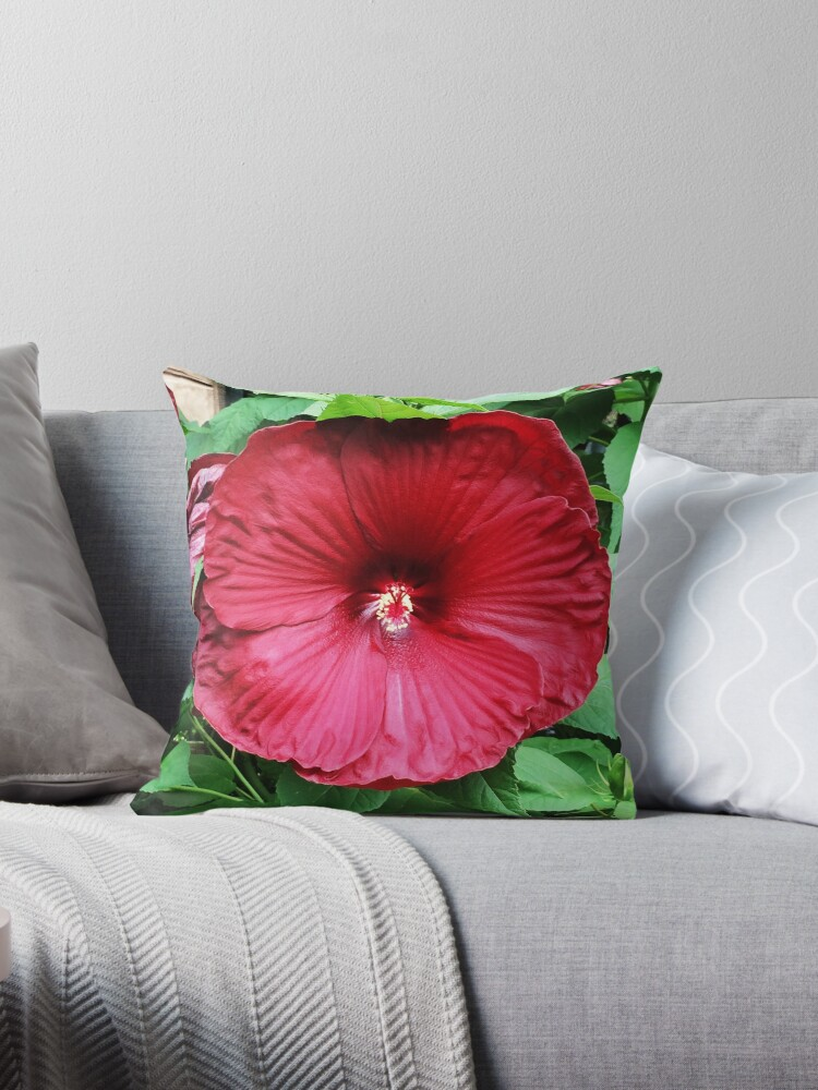 Hibiscus High - Tropical Flower Art Photo by OneDayOneImage - Gift for Gardener - Flower Lover by OneDayArt
