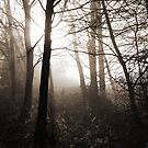 Winter Trees, Morning Mist by Alison Malcolm Flower