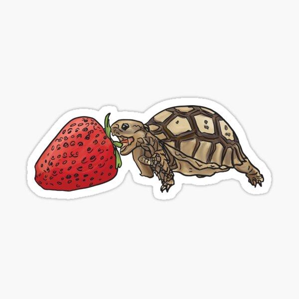 sulcata tortoise vs strawberry Sticker