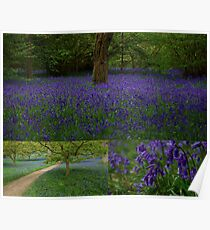 BlueBells Collection Poster