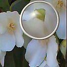 Through The Lens Eye by Michelle Scott