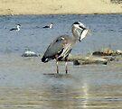 Heron Snags a Fish by Corri Gryting Gutzman