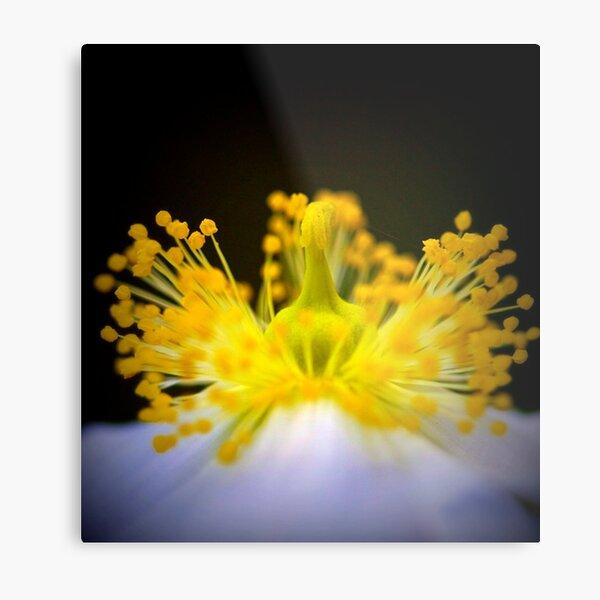 anemone mine Metal Print