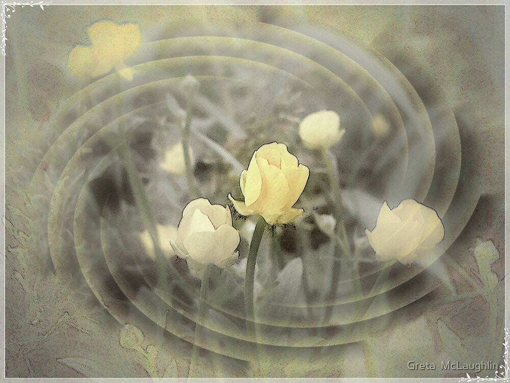 Buttercup by Greta  McLaughlin