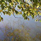 Autumn Reflections by Lozzar Landscape