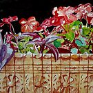 The Window Box by Jim Phillips