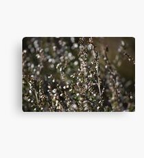 Winter-bleached Heather Canvas Print