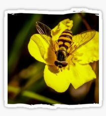 Hover fly on yellow flower Sticker