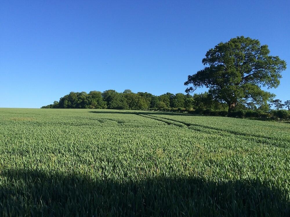 Field near Coleshill, Berkshire by HikerDebs