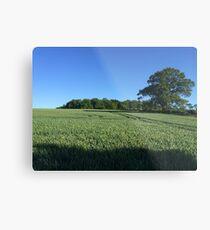 Field near Coleshill, Berkshire Metal Print