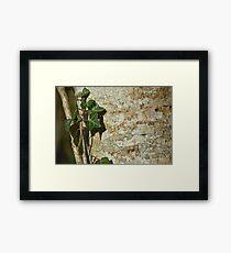Ivy in the Sun Framed Art Print