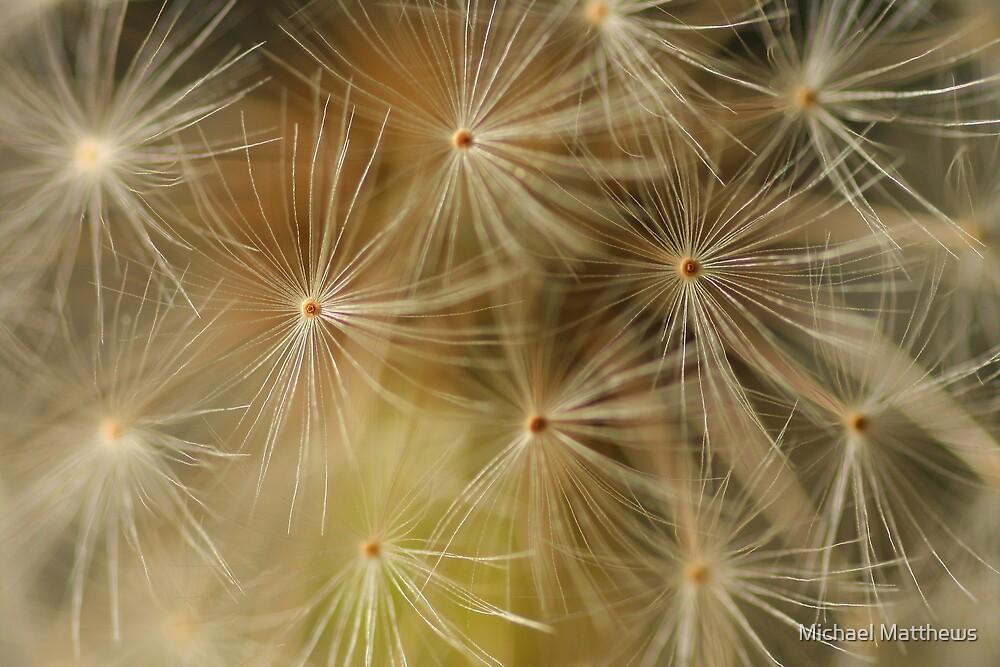 Cosmic dandelion by Michael Matthews