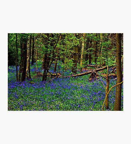 Rhapsody in Blue Photographic Print