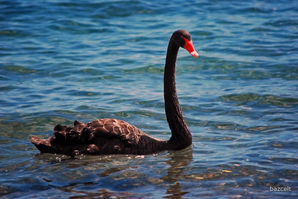 Black Swan Lake by bazcelt
