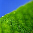 Leafy by HeatherEllis