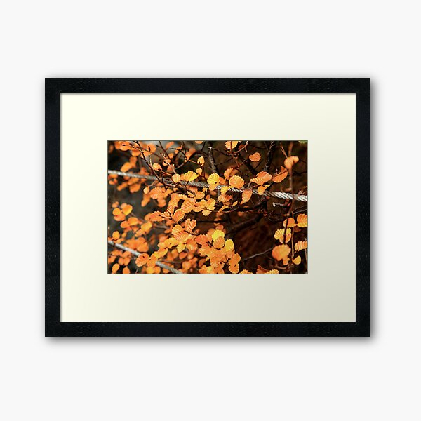 Hanging by Wire Framed Art Print