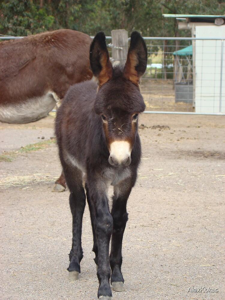 A Donkey Foal by AlexKokas
