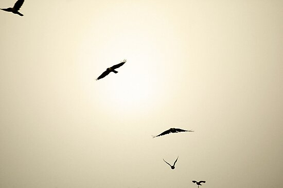 Murder in the sky by rickvohra