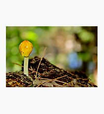 Yellow Cap Photographic Print