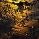 golden sunset in the sand by lukasdf