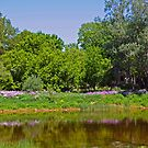 Phlox Along The Grand River by jules572