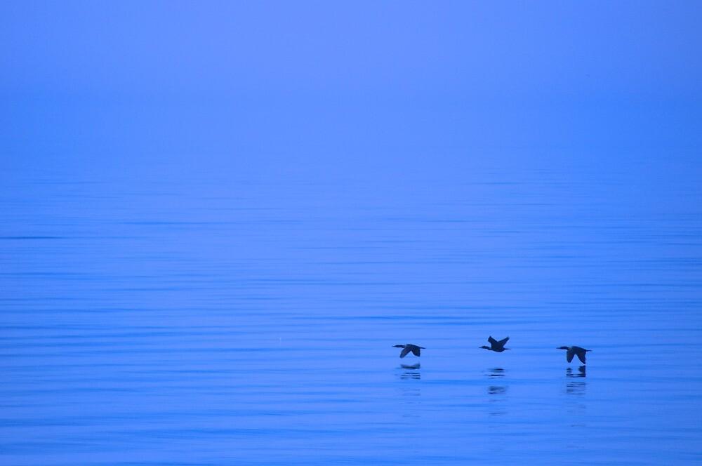 Cormorants Over Lake Ontario by Jessica Dzupina