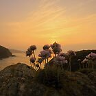 Cornwall: Sea Pinks in the Evening Light by Rob Parsons (AKA Just a Walker with a Camera)