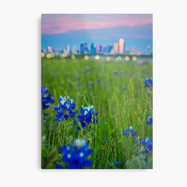 Dallas Bluebonnets Skyline Metal Print
