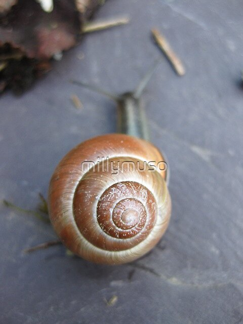 snails home by millymuso