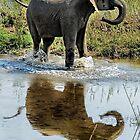 Junger Elefant, der in einer Pfütze spielt von Kay Brewer